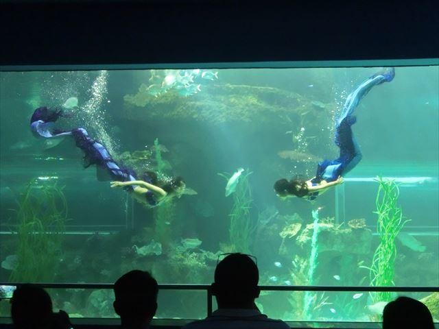 水族館 - マーメイドショー.JPG