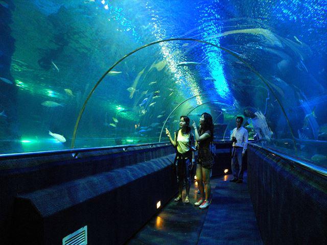 Underwater World (7).jpg